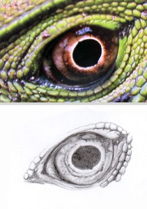 Lizard-Eye-Drawing